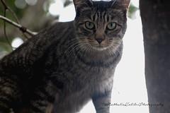 Lass es sein ! (nathaliekolibriphotography) Tags: canon frankreich photos grn moment blau augen dach katzen kater klettern schnurrhaare richtiger aufpassen getiegert