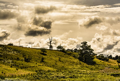 A wee hillside in Perthshire. (AlbOst) Tags: trees clouds sheep perthshire fences hills hillside contrejour hillwalking intothelight greenbeautyforlife