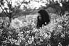 field with flowers in the evening (gorbot.) Tags: flowers blackandwhite field spring syracuse sicily roberta lightroom rangefindercamera mmount leicam8 voigtlander28mmultronf19 vscofilm