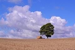 Accident waiting to happen! (AndyorDij) Tags: empingham england rutland uk 2014 harvest highfieldsfarm combineharvester trees tree clouds summer andrewdejardin