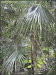 3216699824_cb92f9b4d0_o (gray.florie) Tags: allrightsreserved usewithoutpermissionisillegal ©2009florencetomasulogray florencegray floriegrayflorencetomasulograytomasulofloriegrayfloriegraycom
