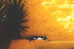 rhodos cat summer chill