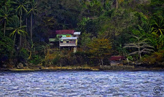Tropical Oceanside home (FotoGrazio) Tags: ocean trees house painterly art home water fauna painting island islands pacific coconut wayne philippines property structure oceanside jungle villa tropical lush stilts mindanao dwelling 2014 dapitan grazio fotograzio