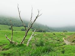Col de Marie-Blaque (Louise Feige) Tags: travel wild mountain france green nature marie montagne mort vert t foret arbre col brouillard verdure paturage pyrne blanque
