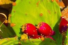 Prickly pear cactus - Fragosyka (mare_maris (very slow)) Tags: flowers cactus plant green nature colors fruits sunshine fruit landscape greek daylight colorful europe earth awesome hellas greece beautifulcolors thorns prickly 1000views thorny planetearth meditteranean pricklypearcactus naturesfinest dayshot fichi inthemountain spinoso pricklyfruit over1000views meditteraneo magenda ελλαδα superbmasterpiece thankyouforyourviews nikond5100 maremaris thecolorofpomegranate fragosyka