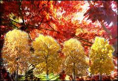 Colori d'autunno (ninin 50) Tags: autunno fineart ps ninin