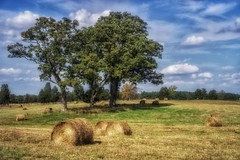 bales (kderricotte) Tags: hay bales sonya6000 35mm18 outdoor trees