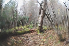 Blurred Motion The Way Forward Outdoors Nature Beauty In Nature No People Artistic Photo (Shannon F Gorman) Tags: blurredmotion thewayforward outdoors nature beautyinnature nopeople artisticphoto