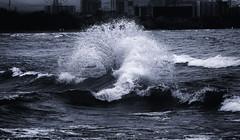 Waves (Metro Tiff) Tags: waves water storm lakeontario hamilton ontario monochrome break surf curl spray mist crest collide current undertow weather swells