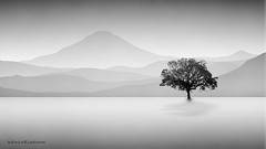 Lone Tree (kevinkishore) Tags: lone tree fineart art fine black white light outdoor mountain mountains minimal minimalism