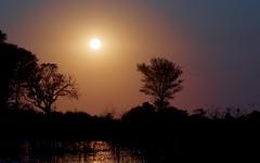 Okavango Sunset (Jos Rambaud) Tags: sunset atardecer sun sol okavango okavangodelta tree delta rio river africa afrika viaje travel