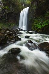 Hopetoun Falls, Otway NP, VIC (Jarrod Hyde Photography) Tags: waterfall nature greatoceanroad australia longexposure rainforest water 5dsr landscape