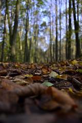 (Kukieka) Tags: photgraphy photo fall autumn