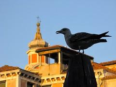 Venetian silhouette (alex.gb) Tags: venetiansilhouette silhouette venetian venice seagull palina bricola sagoma impressionsexpressions clickcamera damncool italians ngc