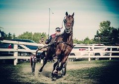 From the horse show (toddrappitt) Tags: september exhibition vegetarian6 rural animal horseandcarriage horse ontario collingwood greatnorthernexhibition t4i rebel canon