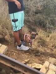 charley (peakintheclouds) Tags: dog hike trail path kokohead kokoheadcrater honolulu hawaii oahu outside workout freshair cardio