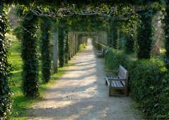 Camino sin fin (Franco DAlbao) Tags: francodalbao dalbao lumix camino path way paseo perspectiva parque park jardines gardens bancos benchs castrelos vigo emparrado