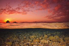 """""""Posta de sol al Mar Roig"""" de Jordi Benitez Castells (somnatus) Tags: finalista categoria general concurs fotografia naturalista ang naturalistes 2013 2012 apnea fotosub jacksonreef marrojo"""