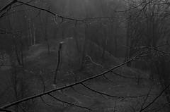 days of rain II (Mindaugas Buivydas) Tags: lietuva lithuania bw rain rainy dark darkness mood moody spring april sadnature neriesregioninisparkas nerisregionalpark tree trees