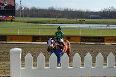 2016-12-02 (20) r3 Yomar Ortiz on #7 Tigers Bop (JLeeFleenor) Tags: photos photography md maryland marylandracing marylandhorseracing laurelpark racing track racetrack jockey   jinete  dokej jocheu  jquei okej kilparatsastaja rennreiter fantino    jokey ngi horses thoroughbreds equine equestrian cheval cavalo cavallo cavall caballo pferd paard perd hevonen hest hestur cal kon konj beygir capall ceffyl cuddy yarraman faras alogo soos kuda uma pfeerd koin    hst     ko  outside outdoors yomaroortiz