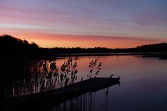 Morgon i Lervik (evisdotter) Tags: sunrise morning colors reflections reed silhouettes jetty nature sooc lervik mariehamn