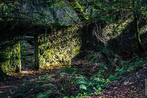 Forêt de Nieul (87)