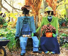 Mr & Mrs Scarecrow (Explored 11.05.2016 ) (BreezyWinter) Tags: mn landscape arboretum scarecrow mrmrsscarecrow pumpkin october park autumn couple romantic fun minnesota mnlandscapearboretum costume farm blue green eggs hat colorful