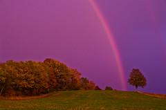 arc-en-ciel du soir... (Denis Vandewalle) Tags: arcenciel rainbow pluie landscape paysage trees arbres autumn rain