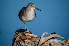 Oasi WWF Orbetello (franxblank) Tags: bird watching mestolone pettegola airone fenicottero fuji xe1 canon fd 500 mirror orbetello laguna oasi wwf fujix10 fujixe1