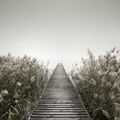 La Dolce Vita (Rohan Reilly Photography) Tags: lake garda minimal jetty reeds sunset misty italy italia lago di
