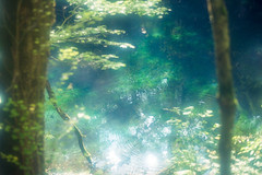 Blue Pond (Sugar Crisp) Tags: contax aria 35mm film analogue 2016 august summer reverie point water blue reflection