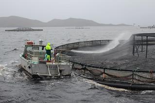 Fish Farming , Macquarie Harbour , Tasmania