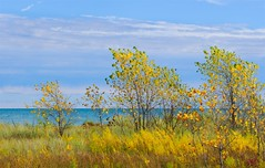 Like a Painting (imageClear) Tags: october fall autumn gold lakeside lakemichigan nature sky trees beauty outdoors aperture nikon d500 80400mm imageclear flickr photostream