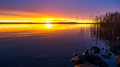 In the Morning (Jens Haggren) Tags: olympus em1 morning sunrise sun sky clouds sea seascape water reflections reed stones view landscape november colours nacka sweden jenshaggren