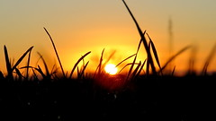 IMG_0117y (gzammarchi) Tags: italia paesaggio natura pianura campagna ravenna villanovadiravenna tramonto sole erba monocrome