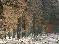 Wintry autumn (joeke pieters) Tags: 1310529 panasonicdmcfz150 nachtvorst nightfrost vorst frost rijp hoarfrost herfst herbst autumn fall automne woold winterswijk achterhoek gelderland nederland netherlands holland november