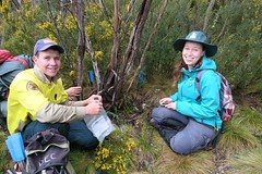 Volunteers and NPWS working together (Environment + Heritage NSW) Tags: officeofenvironmentandheritage orangehawkweed orangehawkweedcontrolprogram weed weedcontrol weedprogram eradication survey huntinghawkweed hawkweed mouseear volunteers volunteerprogram volunteer