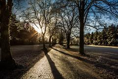 Morning Sun (Fotos aus OWL) Tags: allee frozen cold kalt landschaft senne winter