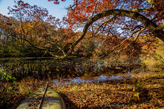 Lily Pond (david.horst.7) Tags: fall autumn lily pond lake leaves boat scenery