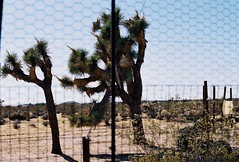 fence / lean (rainy_forecast) Tags: nikonf2 july summer emibell 35mm film colorfilm nikonfilmphotography analogue desert yuccavalley joshuatree noahpurifoy highdeserttestsite socal publicart outdoorart joshuatrees trees sand fence metal landscape desertlandscape