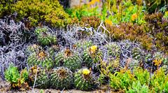 Chile 2013-3590 (sebtac) Tags: chile2013 chile 2013 outdoor 13 reserva nacional pingüino de humboldt