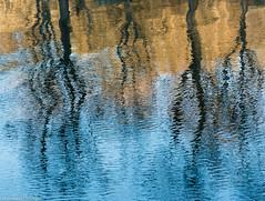 AMS -  Djurgården B-1 (_I_AM_) Tags: djurgården fågel vinter reflections reflexer trees träd speglingar kanal djurgårdskanalen stammar färgrikt himmel veniceofthenorth stockholm sweden