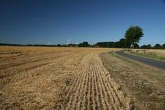 20130720_IMG_0102 (anriro96) Tags: elements heemsen nienburg feld ernte gras getreide blau blue sky rohrsen weser sun summer