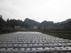 Guizhou China 2016 惠水1 (黔中秘境) Tags: china guizhou asia mountains 中国 贵州 亚洲 山 大自然