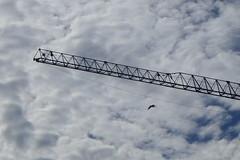 P1010310 (brandsvig) Tags: sky bird clouds skne sweden crane may himmel architect greenhouse sverige ncc malm kran buildingsite bygge 2014 moln fgel lx7 lyftkran augustenborg jaenecke lumixlx7