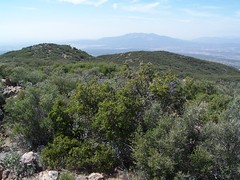 View NW to Cahuilla Mtn.