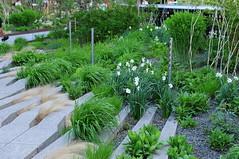 DSC_4454 (irina_h) Tags: plants usa newyork green grass us vegetation innovation thebigapple highmile