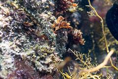 DSC_2411.jpg (d3_plus) Tags: sea sky fish beach japan scenery diving snorkeling  shizuoka    izu     minamiizu     nikon1  hirizo  perchsculpin  nakagi nikon1j1 1nikkor185mmf18  beachhirizo misakafishingport