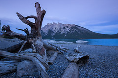 Gnarled Stump at Dusk (John Hill Photography) Tags: park sunset white lake snow canada mountains nature rock canon outdoors waterfall pond scenery rocks angle wildlife tail great wide rocky sigma canadian deer explore national alberta glaciers banff 1020mm 1770 1020 70200 f28 f4 mule whitetail whitetailed 70200mm uwa f4l 1770mm 60d wigma