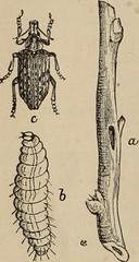 Anglų lietuvių žodynas. Žodis macrodactylus subspinosus reiškia <li>macrodactylus subspinosus</li> lietuviškai.